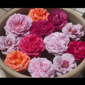 鉢に入れられた涼しげな花達