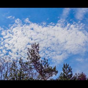 木々に囁く雲