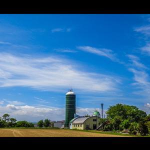 広々とした真夏の牧場風景