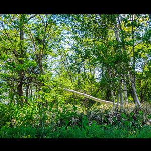 緑深き樹林帯の中に倒木した樹木