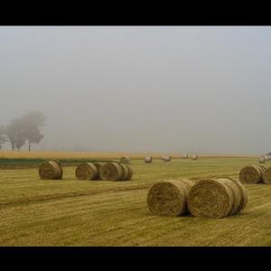 霧の日のグラスロール