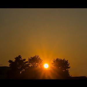 木々の間に沈む夕陽