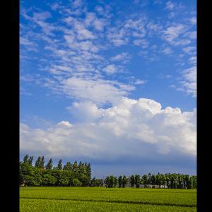 夏,入道雲に農地