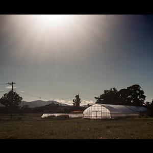 燦々と降り注ぐ陽と温室