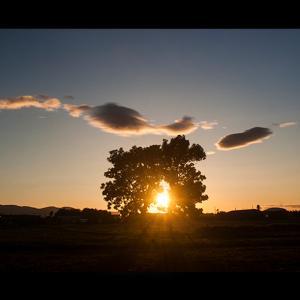 ツインツリーの夕日と流れ雲