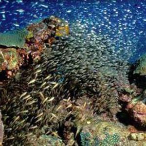 海のアイドル再演-178 「幼魚の集団」