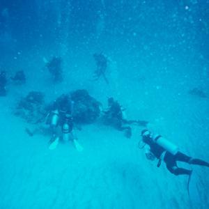 海のアイドル再演ー280 「根に群がるダイバー達」