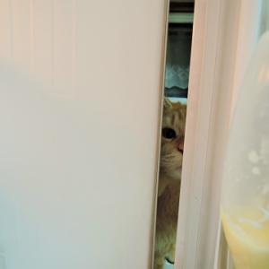 冷蔵庫の向こう側