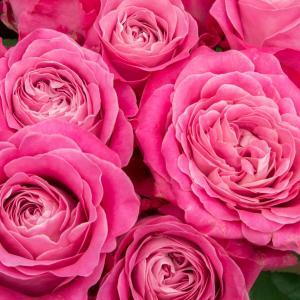 薔薇の言葉