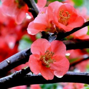 朝から雨の降り続く一日となりました。夕方から松花堂庭園に出かけてきました。