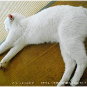 飼い猫ノビタの脱走