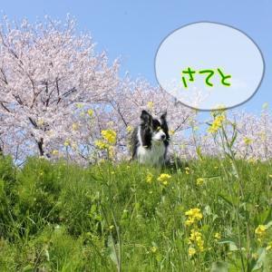 ♪お散歩♪