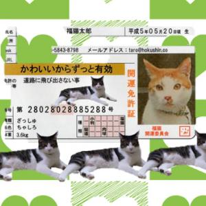 猫の免許証は有効期限なし!!!返納義務もなく幸せだ=fake?