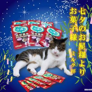 七夕のお星様よりお菓子様・・・ミルク拝