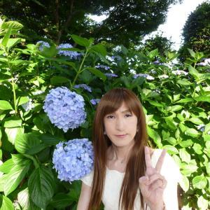 性海寺の紫陽花♪#1