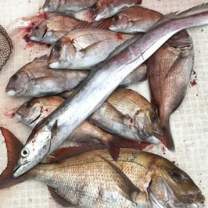 鯛サビキリベンジ