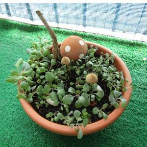 植木鉢にキノコが生えてきました。