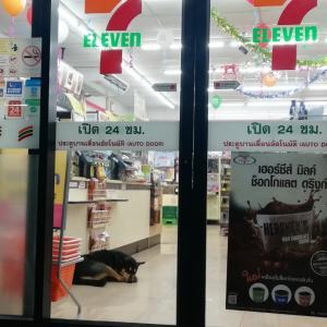 タイらしい光景  7-11店内で犬が爆睡