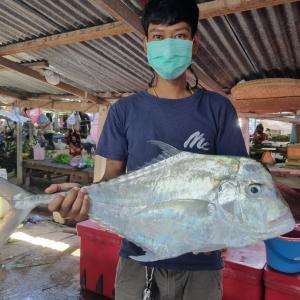 今日の地魚はイトヒキアジとマナガツオ