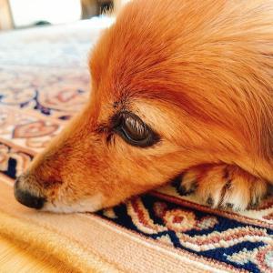 愛犬との別れ
