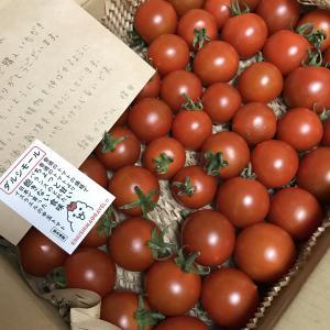 イスラエルトマト