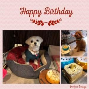 ルウのお誕生日