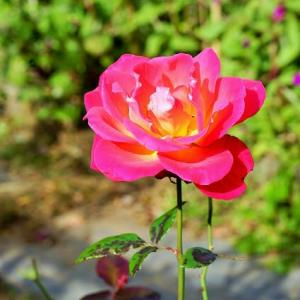 19-11.15BF:水元公園の花壇