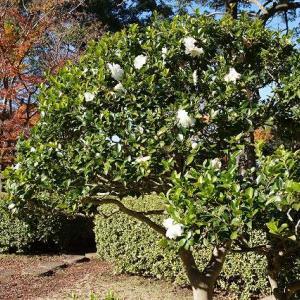 19-12.8bf:戸定が丘歴史公園の庭