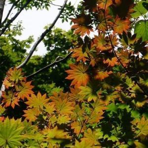 19-8blog秋の気配:御坂山・黒岳[御坂山塊]の気ままに山歩きsessk