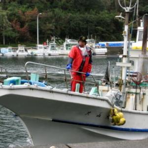 今日の「あのりふぐ漁」