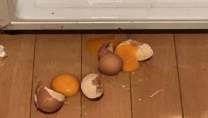 卵が落ちたおもしろさ