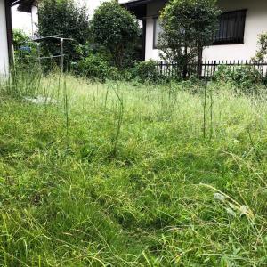 ジャングルと化した庭に立ち向かう勇気がやっと出た朝