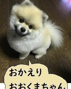 帰ってきた柴三郎