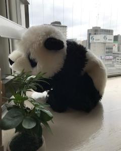 大熊猫 NO.10