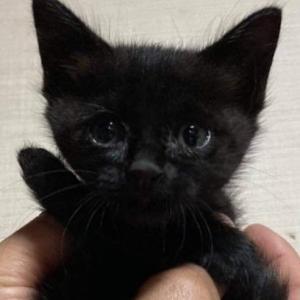 誰か黒猫ヒキトリマセンカ??