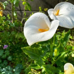 おうち時間に彩りを添えてくれた花
