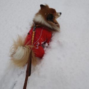 降ってしまった・・・雪