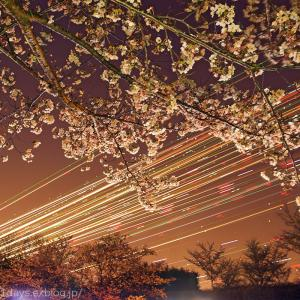 NRT夜桜ヒコーキの光跡