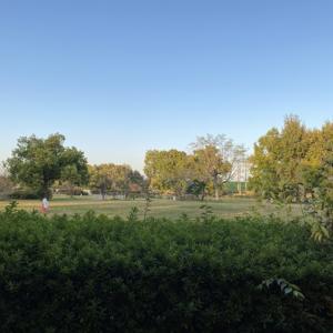 一年ぶりの公園