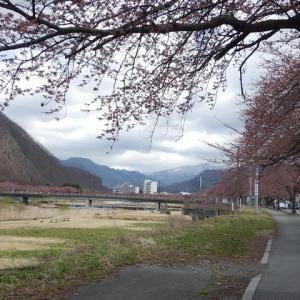 山形市馬見ヶ崎川さくらラインです