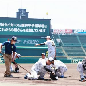 矢野監督ら甲子園の土集め、女子野球部3年にも!高山猛アピール!志願の2軍戦で3試合連続安打!
