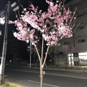 桜 2019  in  花小金井