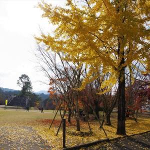 鹿児島県へ紅葉ツーリング(曽木の滝)