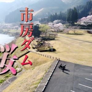 市房ダム・桜