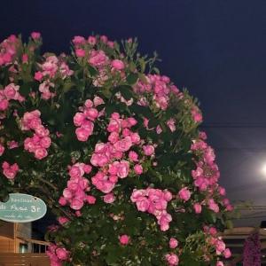 ◆5月の満月、フラワームーン☆
