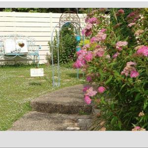 ◆かわいいシモツケの花