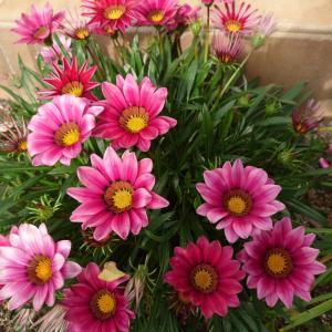◆庭には、まだ夏の花
