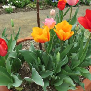 ◆花束みたいな庭の花