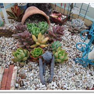 ◆物語のある多肉植物の箱庭 (^^)♪