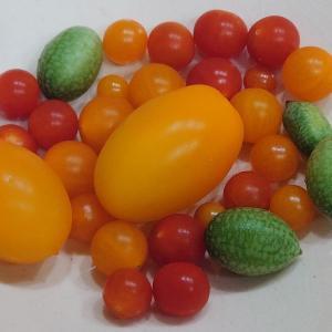 ◆マイクロトマト&プチキュー
